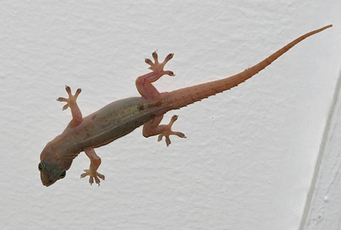 Gecko Tours Cuba