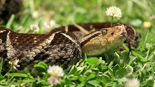 extracto-ipe-amarillo-mordedura-serpientes_ediima20131104_0616_18