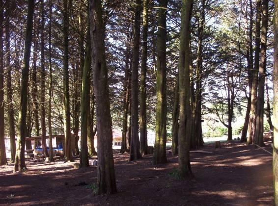 Bosque de Fraijanes