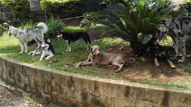 FB Albricias Hotel para Mascotas