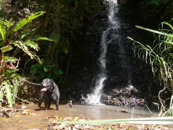 FB: Hotel y Spa para Mascotas