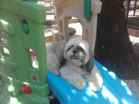 """Facebook: Hotel para Mascotas """"Villa de Perros"""