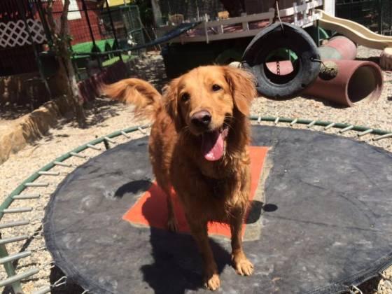 """Facebook: Hotel para Mascotas """"Villa de Perros"""""""