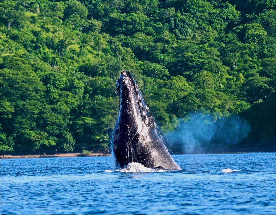 whale-marino-ballena-national-park-costa-rica